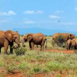 Keňa jako netradiční dovolená