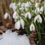 Dlouhodobá předpověď počasí na březen